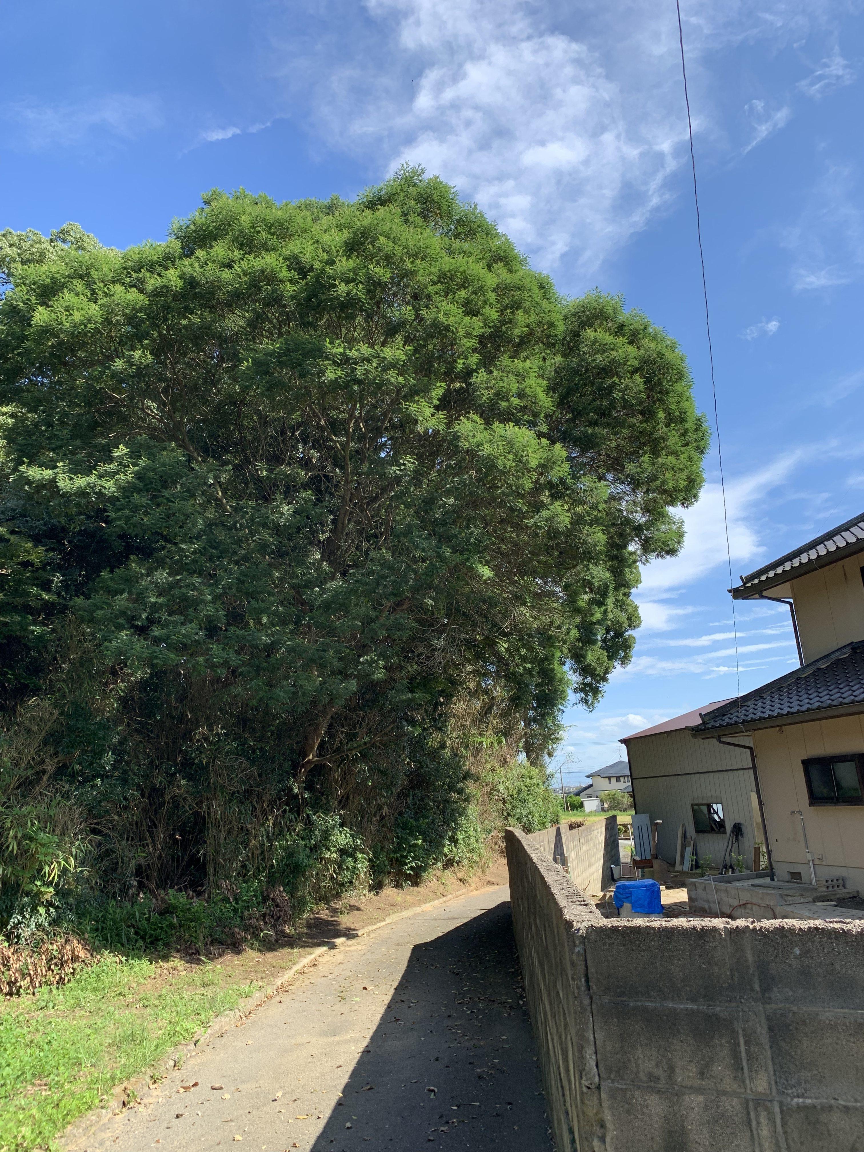 Y邸樹木伐採工事