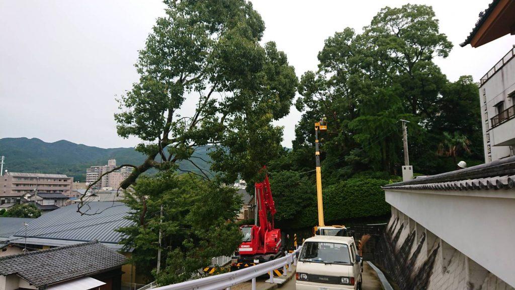 蓮照寺樹木伐採工事
