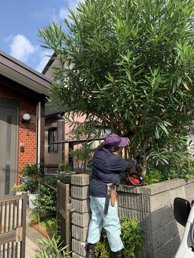 菊川樹木伐採工事