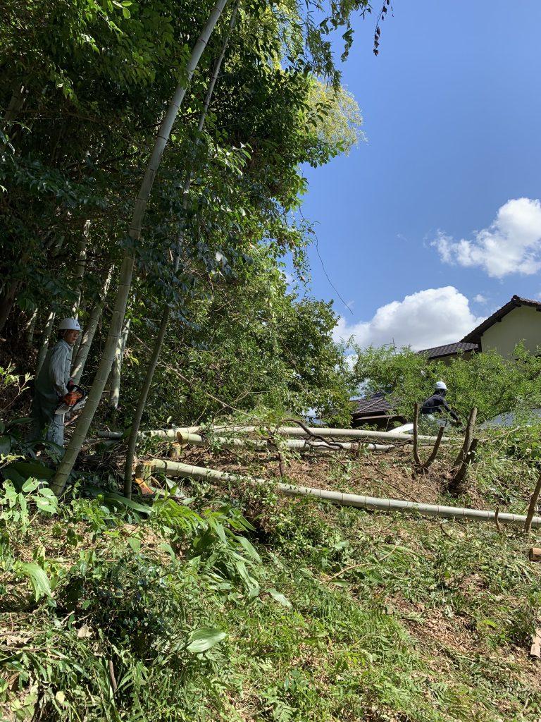 川波樹木伐採工事