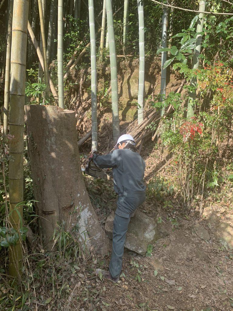 S邸樹木伐採工