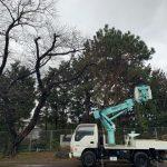 岡垣町 樹木伐採工事