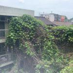 K樹木伐採工事 八幡東区