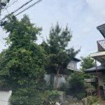 M樹木伐採工事 八幡東区