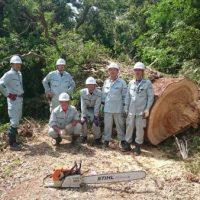 2016/10/31 直径180cmの大木を撤去しました