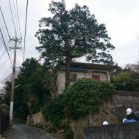 2017/2/7 八幡東区勝山町 O邸 C=170の桧の伐採です。