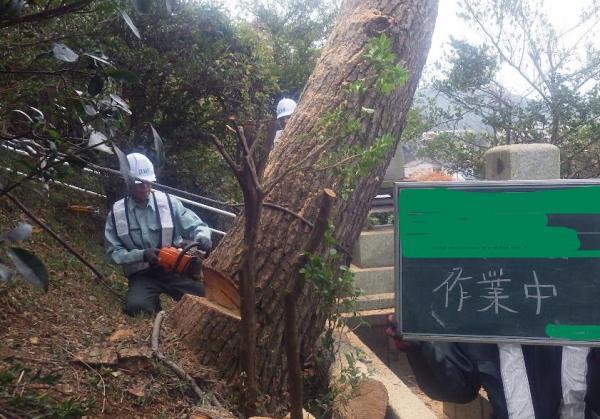 2015/11/30 若松区小山田霊園樹木伐採!