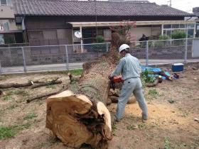 2013/6/5 小倉北区原町C-2000クス伐採工事!