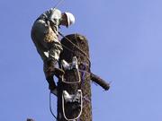 大木切り施工写真